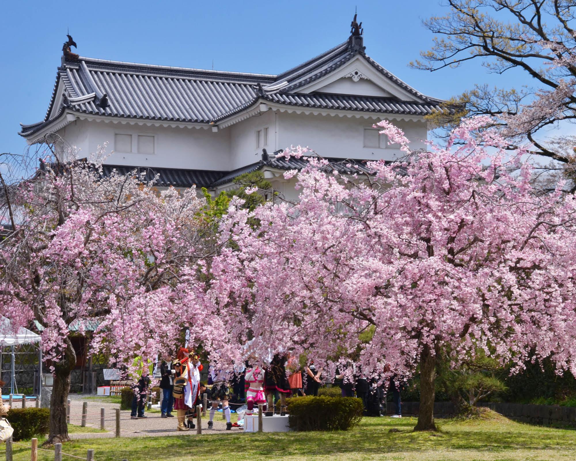 https://www.shizuoka-cb.com/wp-content/uploads/2021/03/photo-top14.jpg