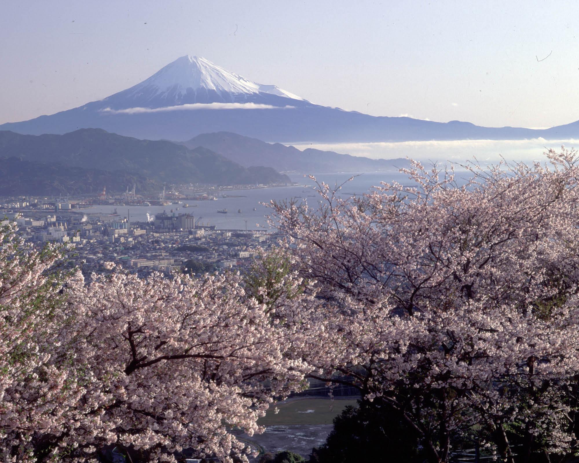 https://www.shizuoka-cb.com/wp-content/uploads/2021/03/photo-why13.jpg